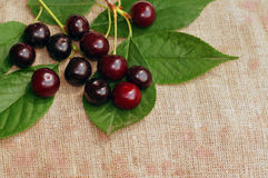 Ripe cherry on the rough fabric as the background Stock Images