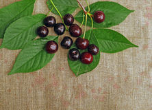 Ripe cherry on the rough fabric as the background Stock Image