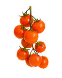 Ripe cherry tomatoes. Ripe cherry tomatoes in the drops of water. Isolation Stock Image