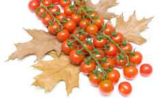 Ripe cherry tomatoes and autumn leaves on white background Stock Image