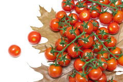 Ripe cherry tomatoes and autumn leaves on a white background Royalty Free Stock Photography