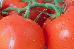 Ripe cherry tomatoes Royalty Free Stock Image