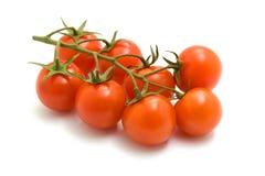 Ripe cherry tomatoes on branch on white. Appetizing fresh cherry tomatoes on white background Royalty Free Stock Photo