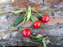 Ripe cherry on a wooden background. Three berries of cherry on a wooden pine background Stock Images