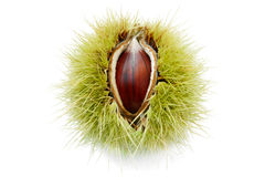 Ripe Chestnut Fruit Royalty Free Stock Image