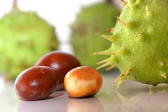 Ripe chestnuts. Closeup of a ripe chestnuts royalty free stock photos