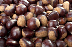Ripe Chestnuts Stock Images
