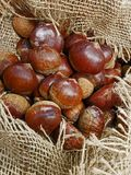 Ripe Chestnuts in the jute hessian sack bag on the market`s disp. Lay.Close up Royalty Free Stock Image