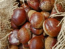 Ripe Chestnuts in the jute hessian sack bag on the market`s disp Stock Images