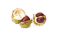 Ripe chestnuts on a white. Royalty Free Stock Image