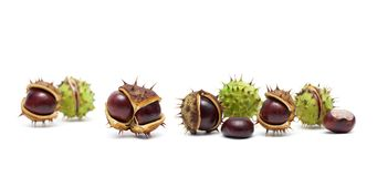 Ripe chestnuts on a white background Stock Photo