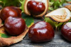 Ripe chestnuts on the wooden table stock photo