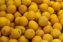 Ripe citron fruit Stock Image