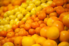 Ripe citrus fruit Stock Images