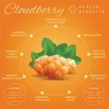 Ripe cloudberry health benefits infographics. Creeping raspberry Royalty Free Stock Photo