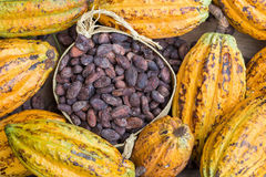 Ripe cocoa pod and beans setup on rustic wooden background Royalty Free Stock Photo
