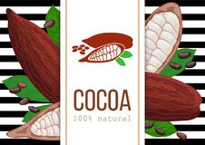 Ripe Cocoa pod fruit, beans and leaves. 3d icon vector set. black and white stripes with text 100 natural. Vertical. Label. Chocolate ingridients. For cooking Stock Images