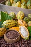 Ripe cocoa pod and nibs, cocoa beans setup background Royalty Free Stock Image