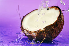 Ripe coconut Royalty Free Stock Photos