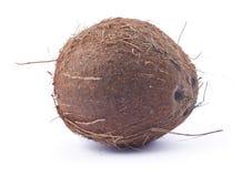 Ripe coconut. Brown ripe coconut on white background Stock Photo