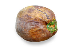 The ripe coconut. Royalty Free Stock Photos