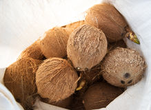 Ripe coconut Stock Photography