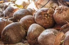 Ripe coconut. Stock Photo