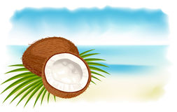 Ripe coconuts, sea and beach. Royalty Free Stock Photography