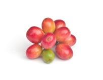 Ripe coffee beans . Stock Photos