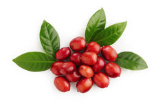 Ripe coffee beans Stock Photos