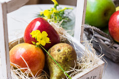 Ripe colorful apples and pear in wood box on straw, yellow flowers, basket on garden table outdoors Royalty Free Stock Photos