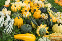 Ripe colorful pumpkins, new harvest, ready to cook and for decor Stock Photo