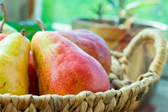 Ripe colorful red and yellow organic pears in wicker basket on garden table by window, flowers in pots, green background Stock Image