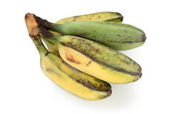Ripe cooking banana Royalty Free Stock Images