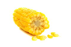 Ripe corn. Royalty Free Stock Photo