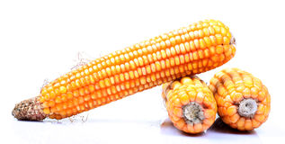 Ripe corn Royalty Free Stock Photo