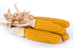 Ripe corn Stock Photography