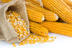 Ripe corn Royalty Free Stock Photos