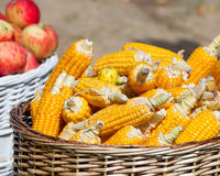 Ripe corn and apples in baskets Stock Images