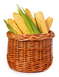 Ripe corn in a basket isolated on a white Royalty Free Stock Photos