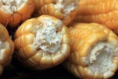 Ripe corn on brown background closeup Stock Photos