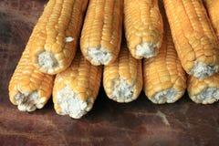Ripe corn on brown background closeup Royalty Free Stock Photo