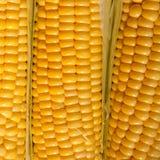 Ripe corn closeup. Fresh ripe corn closeup, selective focus Stock Photography