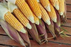 Ripe corn cob closeup Stock Images
