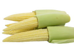 Ripe corn on the cob isolate Royalty Free Stock Photography