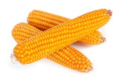 Ripe corn on the cob  on white Stock Photo