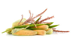 Ripe corn cobs Stock Photos