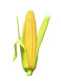 Ripe corn ear. Vector illustration, isolated on white background Royalty Free Stock Photos