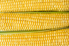 Ripe corn grains on cob and green leaves. Closeup Royalty Free Stock Photo