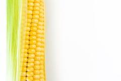 Ripe corn grains on cob. White background. Closeup isolated macro Royalty Free Stock Photos